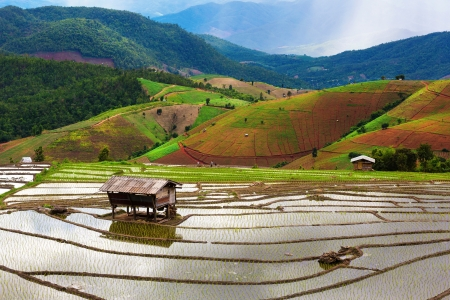 Steps rice field at northern of Thailand. photo