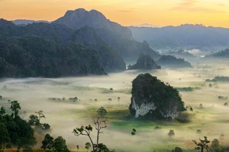 blue mountains tree frog: sunshine on the morning mist At Phu Lang Ka, Phayao, Thailand