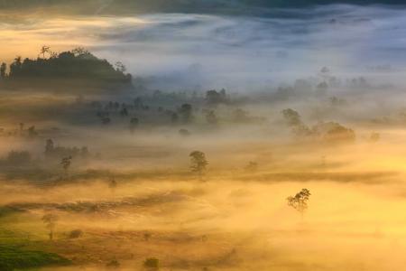 blue mountains tree frog: morning mist cover tree and mountain At Phu Lang Ka, Phayao, Thailand