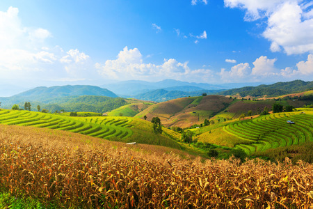 Terraced Paddy Field in Mae-Jam Village , Chaingmai Province , Thailand Stock Photo
