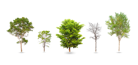 Collection of trees isolated on white background. Stock Photo