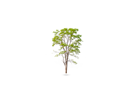 Isolated of Green tree on white background with clipping path. Stock Photo