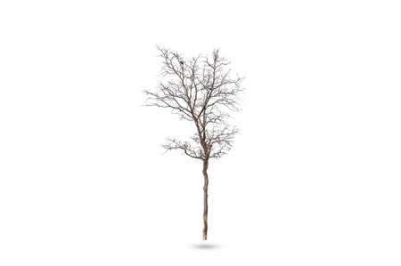 Dead tree isolated on white background with clipping path. Stock Photo