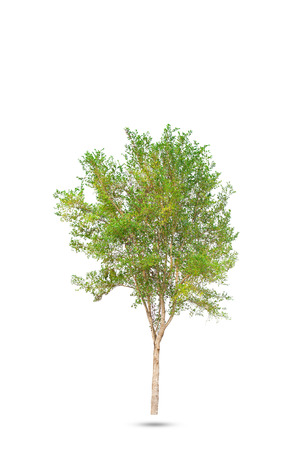 Isolated of Green tree on white background with