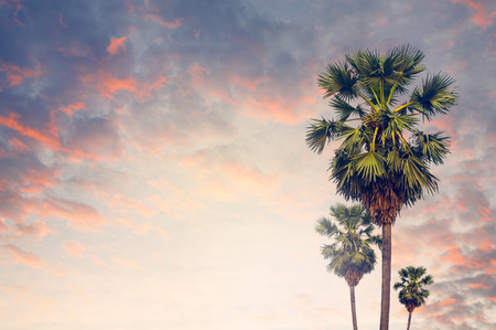 Three of palm tree isoloated on sunset background