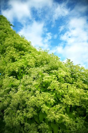 very green plant and blue sky Stock Photo - 4739137