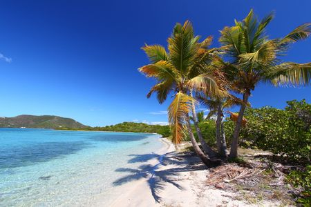 Palm trees on the beach of Beef Island - British Virgin Islands. Stock Photo