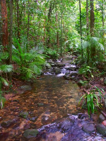 Daintree Rainforest - Queensland, Australia photo