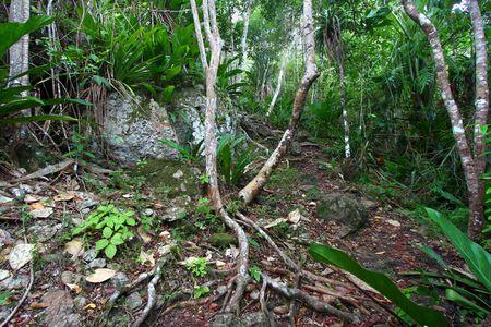 the virgin islands: Virgin Islands National Park - Saint John (USVI)