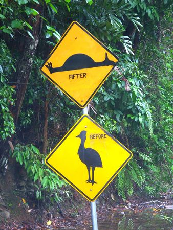 cassowary: Cassowary sign in the Daintree Rainforest of Queensland, Australia Stock Photo