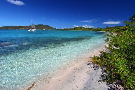 Vegetation along a beach - British Virgin Islands photo