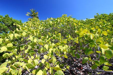 Vegetation on Beef Island in the British Virgin Islands photo