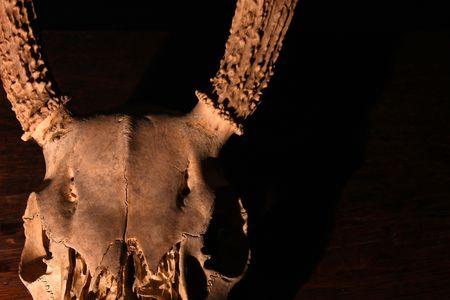 Creepy Deer Skull against the darkness of night photo