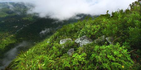Saint Lucia from the cloud covered summit of the Petit Piton Stock Photo - 7798672