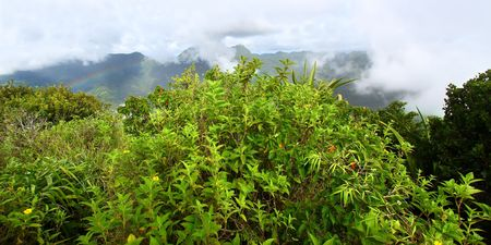 View of Saint Lucia from the cloud covered summit of the Petit Piton - Saint Lucia Stock Photo - 7798682