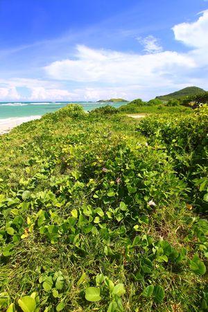 Tropical vegetation grows along the coast at Anse de Sables Beach in Saint Lucia. photo