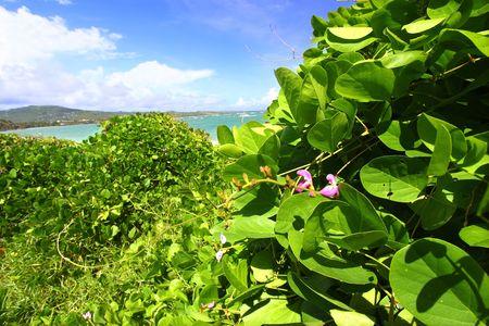 Tropical vegetation grows along the coast at Anse de Sables Beach in Saint Lucia photo