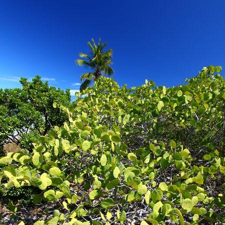 Vegetation grows on Beef Island in the British Virgin Islands. photo