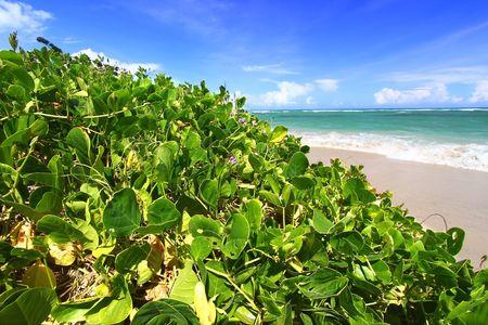 Anse de Sables Beach - Saint Lucia photo