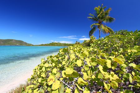 Vegetation grows along the beach of Beef Island in the British Virgin Islands photo