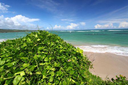 Lush vegetation grows along the coast at Anse de Sables Beach in Saint Lucia