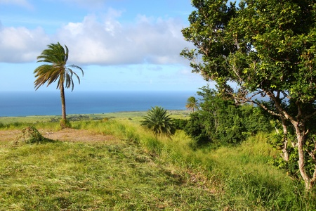 uplands: Landscape of the agricultural uplands of Saint Kitts