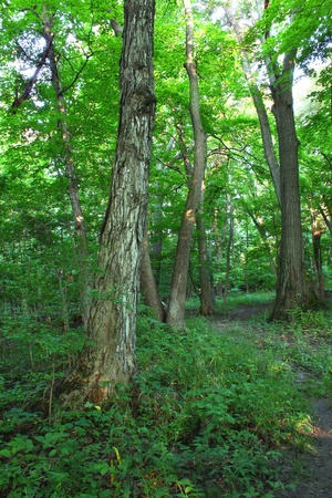 beautiful woodland: Beautiful woodland at Shabbona Lake State Park in northern Illinois