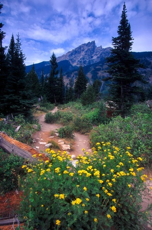 Trail winds through the valley at Grand Teton National Park in Wyoming photo