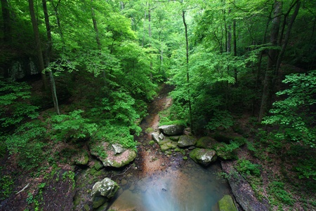 cane creek: Small creek flows through a deep gorge of Alabama Stock Photo