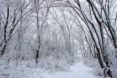 Fresh snowfall along a hiking trail in northern Illinois. Stock Photo - 8773723