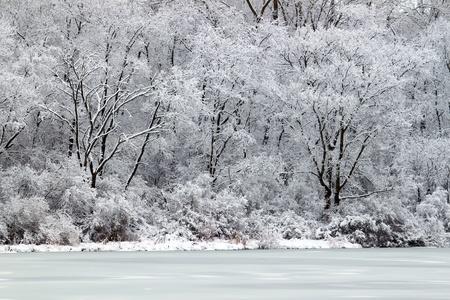 freshly fallen snow: Appena caduta neve su Pierce lago al Rock Cut State Park - Illinois Archivio Fotografico