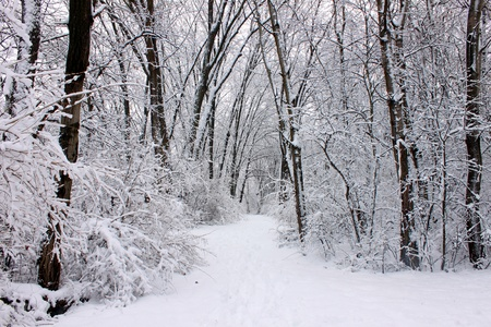 Fresh snowfall along a hiking trail in northern Illinois photo
