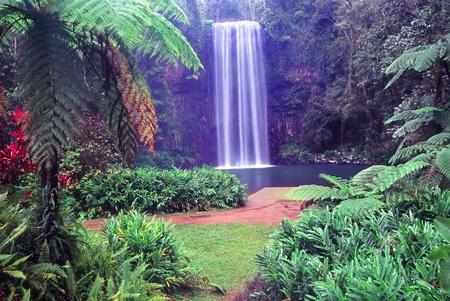 Millaa Millaa Falls of Wooroonooran National Park in tropical Queensland, Australia Stock Photo - 8779152