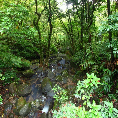 View of the famous El Yunque Rainforest of Puerto Rico photo