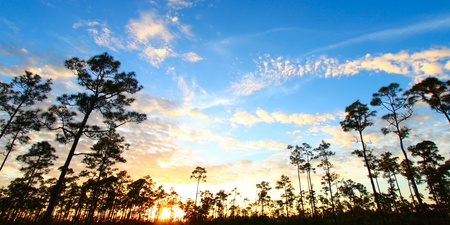Beautiful sunset over a forest in the Everglades National Park of Florida Stock Photo
