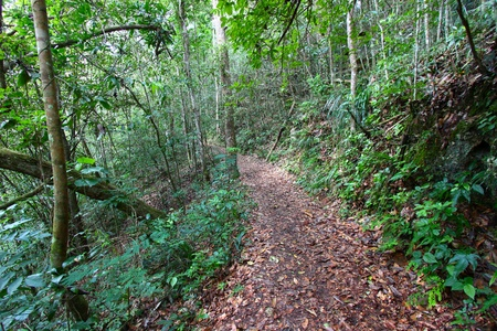 Trail winding through the Guajataca Forest Reserve of Puerto Rico.