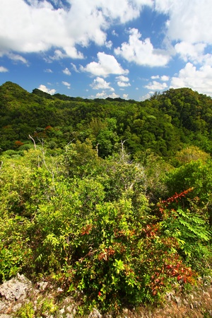 Beautiful landscape of Guajataca Forest Reserve in Puerto Rico. photo