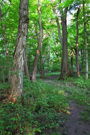 beautiful woodland: A beautiful woodland at Shabbona Lake State Park in northern Illinois. Stock Photo