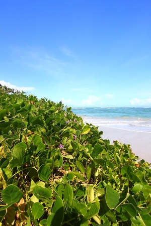 Tropical beach on the Caribbean island of Saint Lucia photo