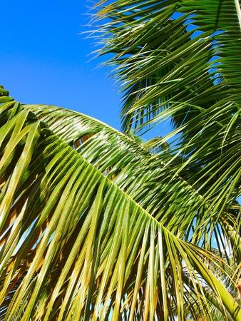 mares: Mirando una palmera en la playa de siete mares en Puerto Rico