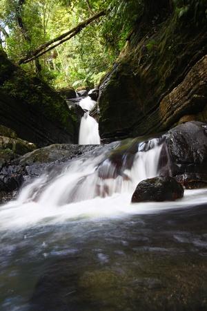 Rainforest cascade above La Mina Falls in Puerto Rico photo