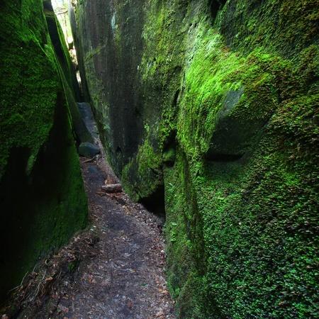 dismal: Mossy narrow corridor through giant rocks in Alabama