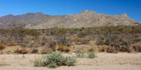 bernardino: Landscape of the Mojave National Preserve in California