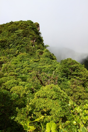 dropoff: Cloudy rainforest peak in the highlands of Saint Kitts