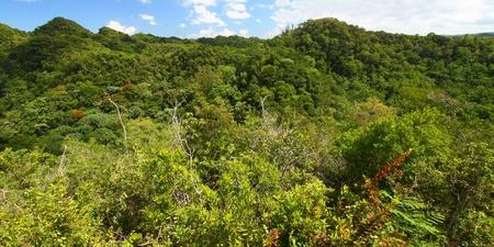 Dense vegetation of Guajataca Forest Reserve in Puerto Rico. photo