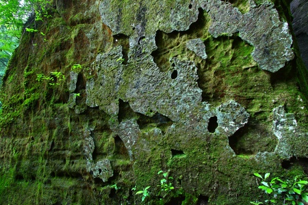 alabama: Ancient moss covered rock wall in northern Alabama