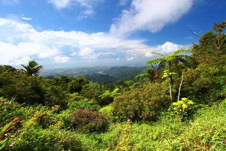 Beautiful view of the lush tropical forests of Puerto Rico Archivio Fotografico