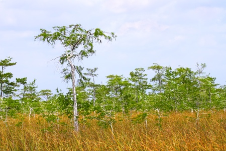 Vast expanse of the Everglades National Park in the dry season Stock Photo - 9896671