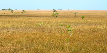 Vast expanse of the Everglades National Park in the dry season photo