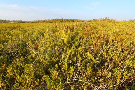 everglades national park: View of the Everglades National Park from the Coastal Prairie Trail